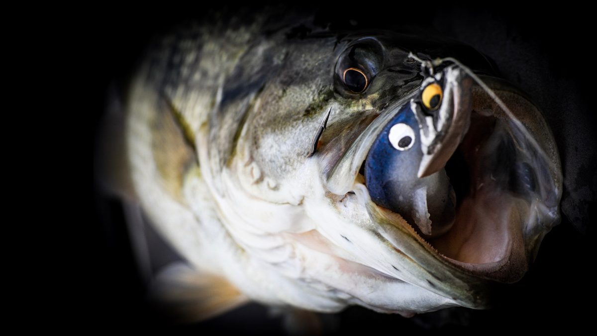 Spark-Shad-Spotted-Bass-Body-Balance