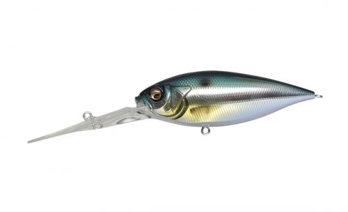 M THREADFIN SHAD