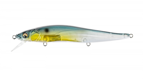 GP THREADFIN SHAD
