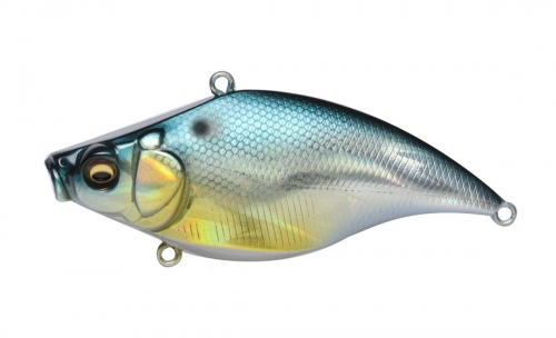 GG THREADFIN SHAD